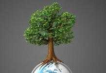 educacao ambiental sensibilizacao